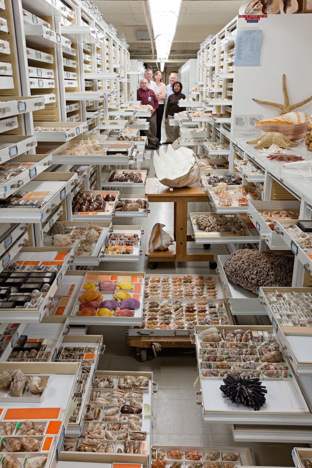 Collections from the Department of Invertebrate Zoology are displayed at the Smithsonian Institution