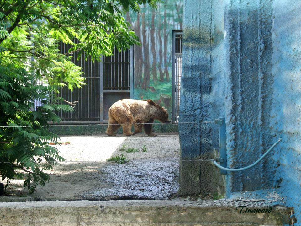 зоопарк-17.jpg