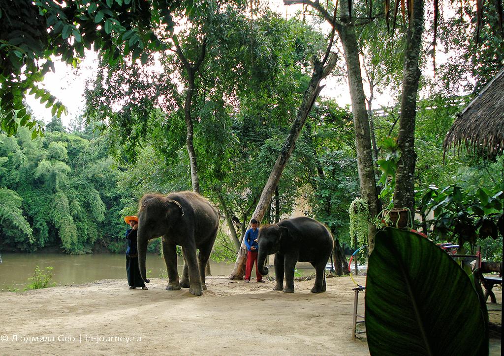 слоновье представление