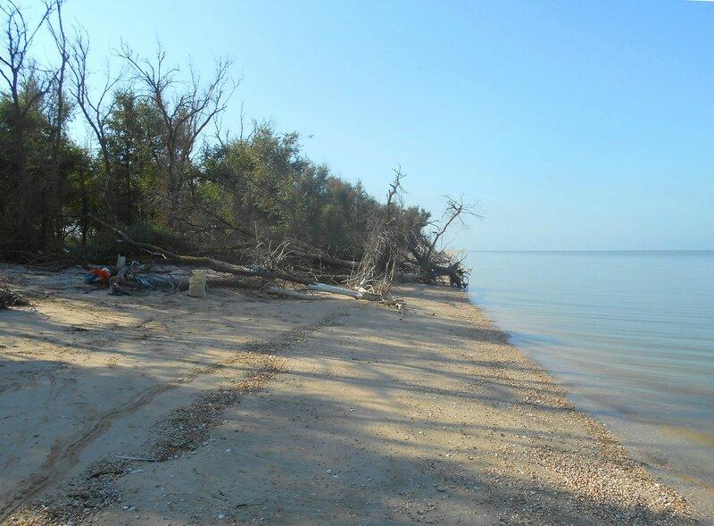 Песок у леска у моря ... DSCN8105.JPG