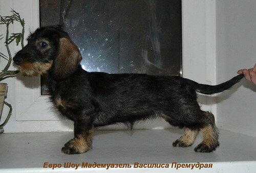 [img]https://img-fotki.yandex.ru/get/56796/95705895.3a/0_dddc3_3ad29d08_L.jpg[/img]