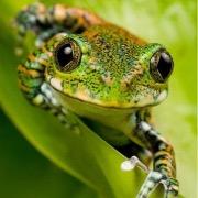 снится женщине чему к жаба красная