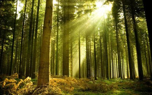 В 2016 году в Молдове заложили более 1250 га лесонасаждений