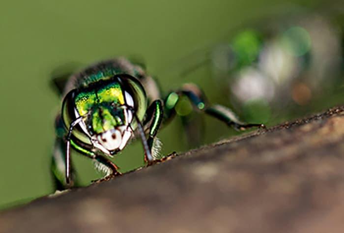 Ученые создадут беспилотники по подобию насекомых