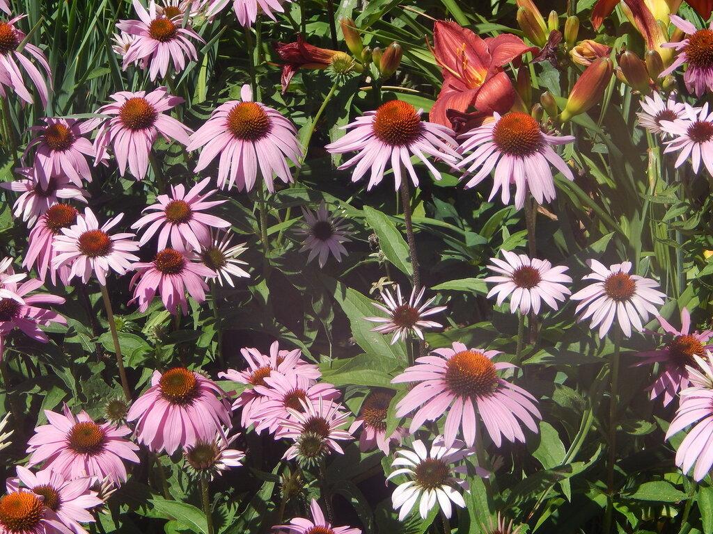 Домик, утопающий в цветах.