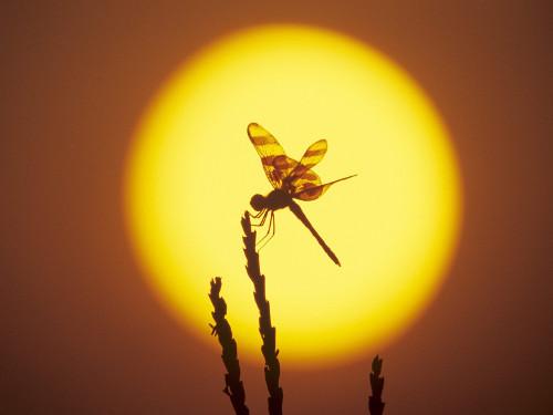 День летнего солнцестояния! Жизнь прекрасна!