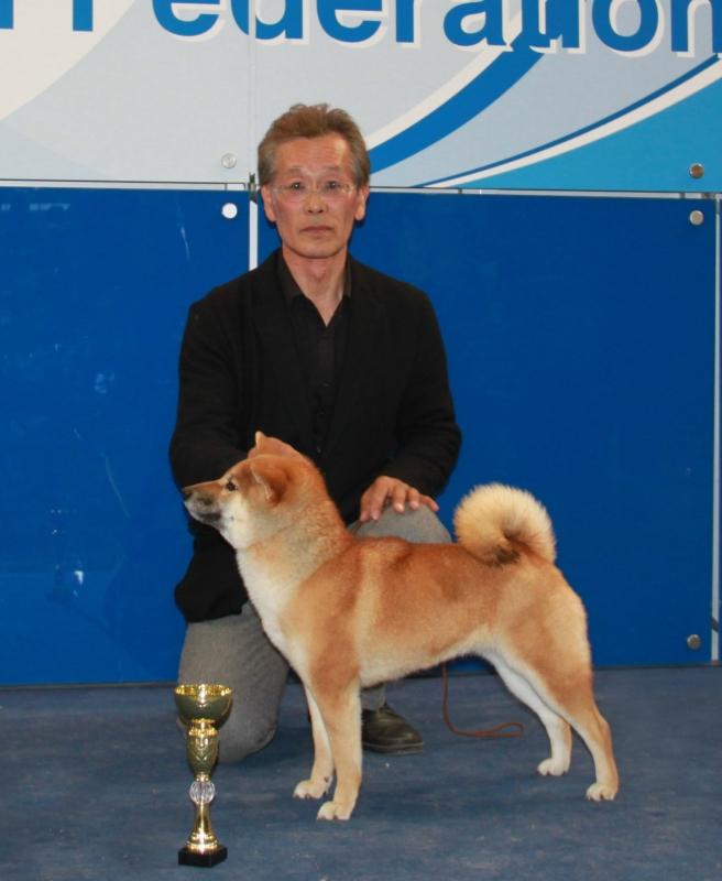 Kurenai No Kashin Go Etchuu Wakasugisou, Лучшая сука-юниор породы Сиба Ину на выставке Россия.jpg