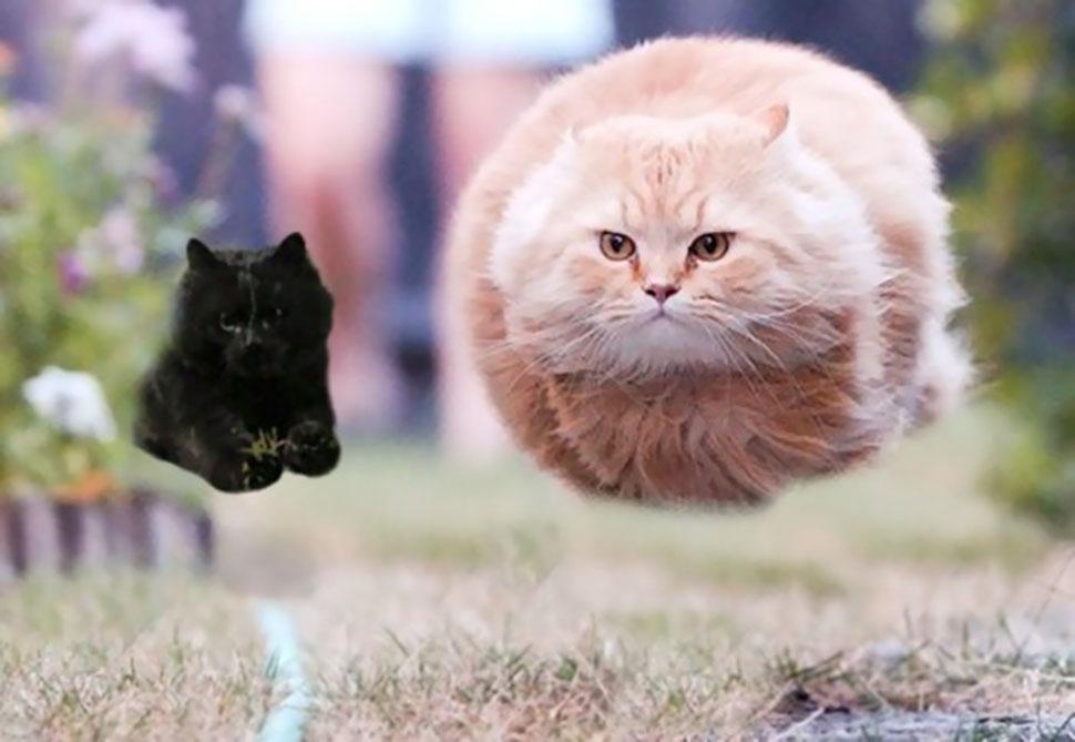 Два летающих кота.