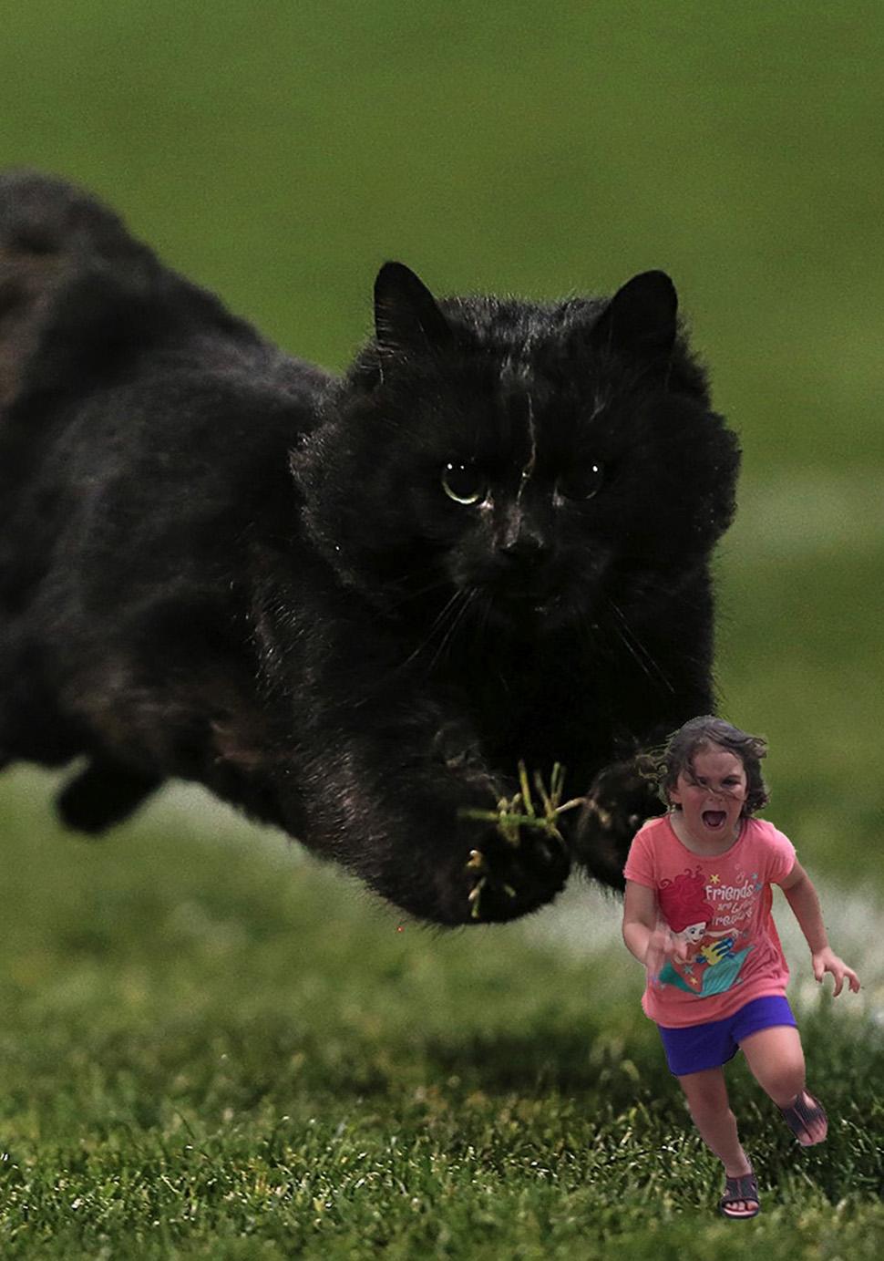 Девочка уносит ноги не от павлина, а от кота.