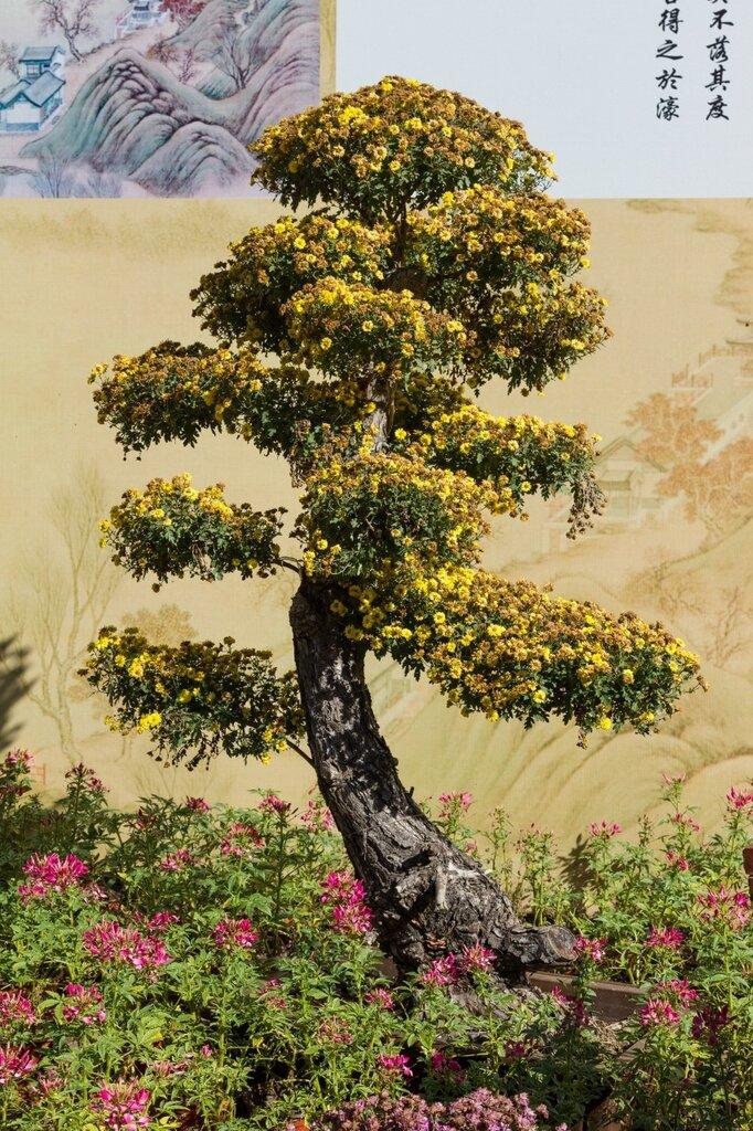 Дерево из хризантем