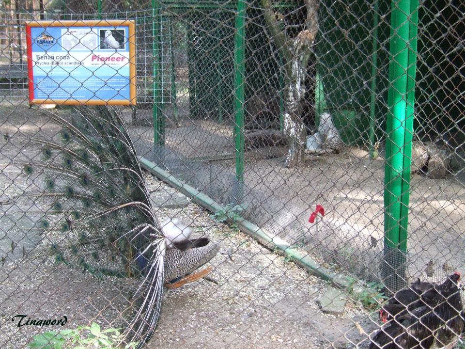 зоопарк-18.jpg