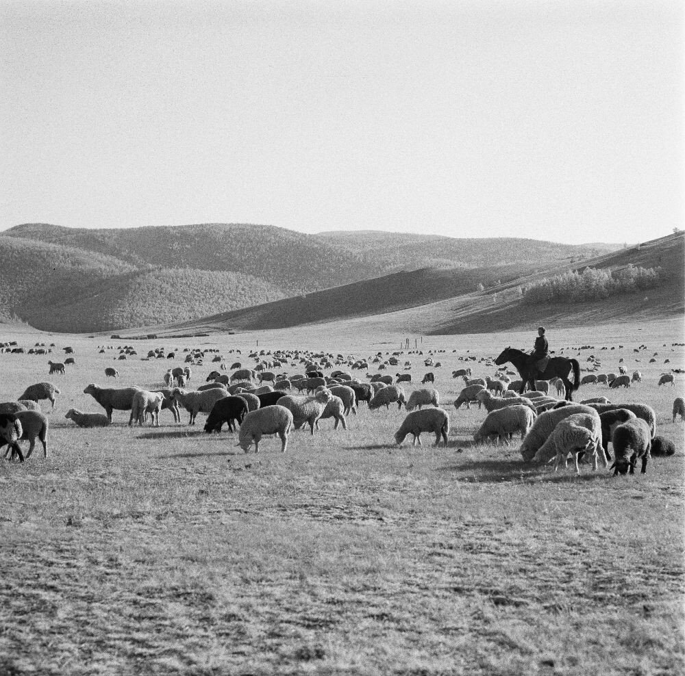 Пастух со своим стадом