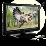 3D - Eagle
