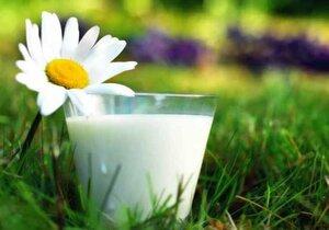 В больших количествах молоко вредно для организма