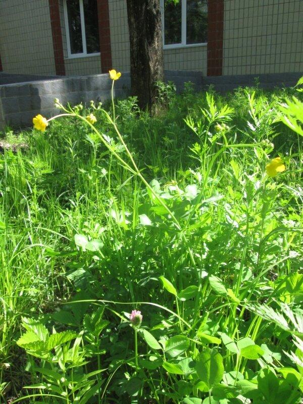 цеты и травы. июнь