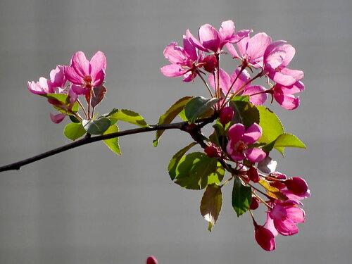 Цветы мая
