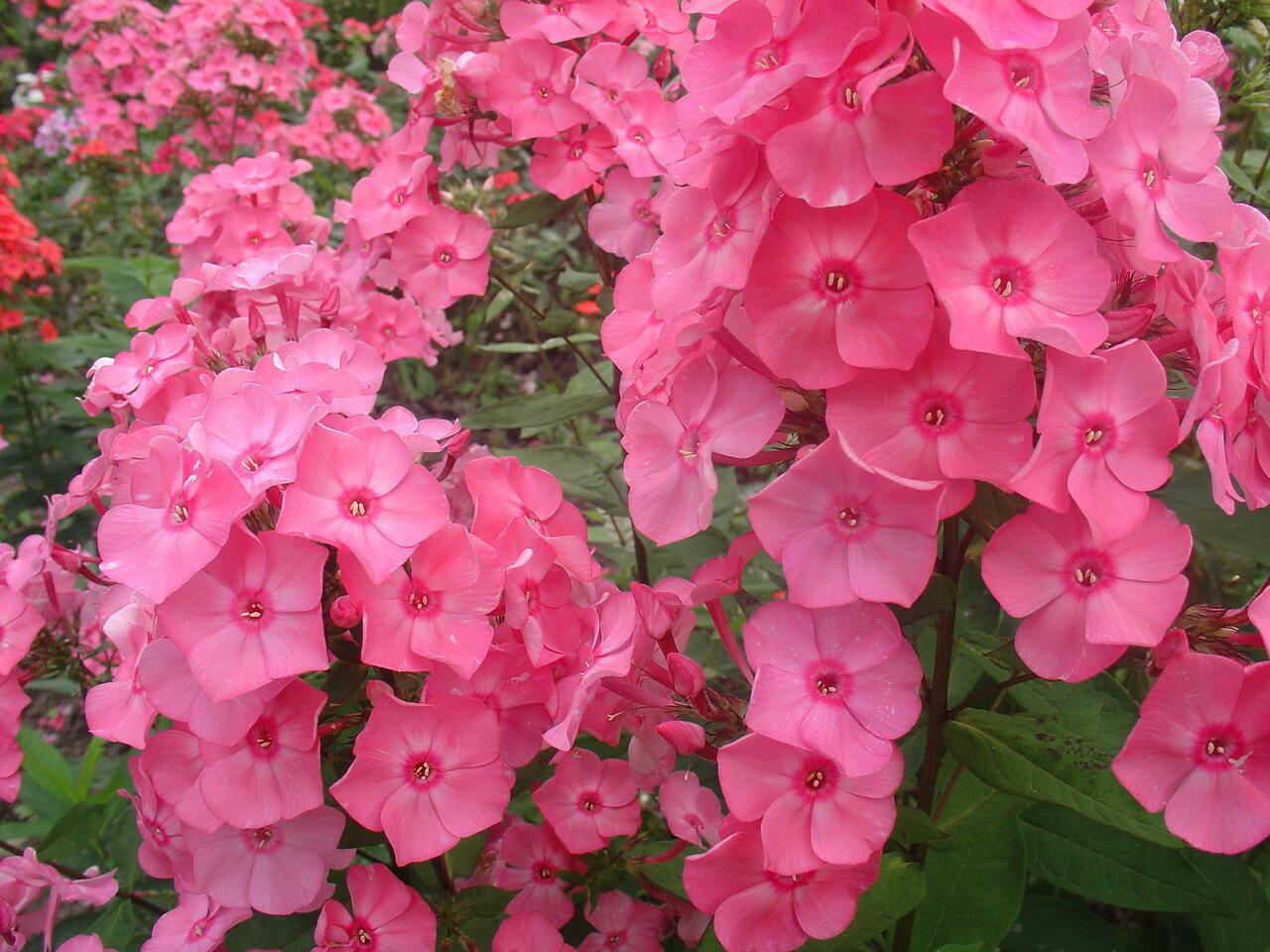 цветы, цветы, цветы,