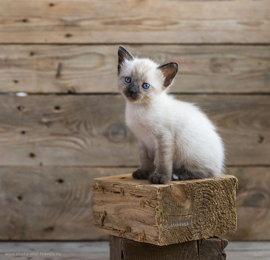 Фото 15. Как я фотографировал котят при естественном свете от окна. Урок фотографии. Покорность (1000, 50, 4.0, 1/400)