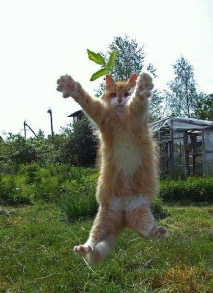 Котики и кошечки 0_7bfb1_fb67111a_orig