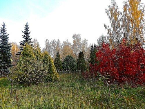 Осень краски разбросала на деревья и кусты..