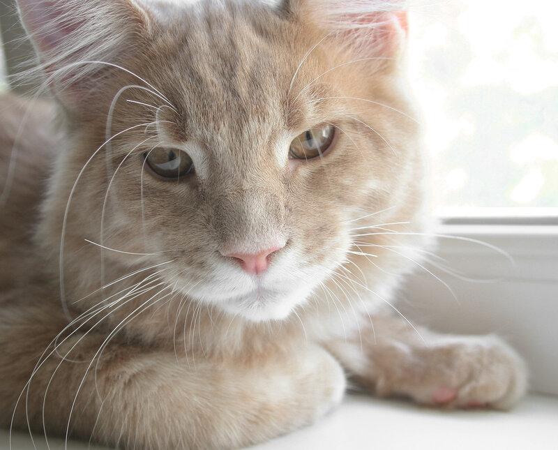 4 месяца. Ответственный отчет по проделанному коту. И бонус!