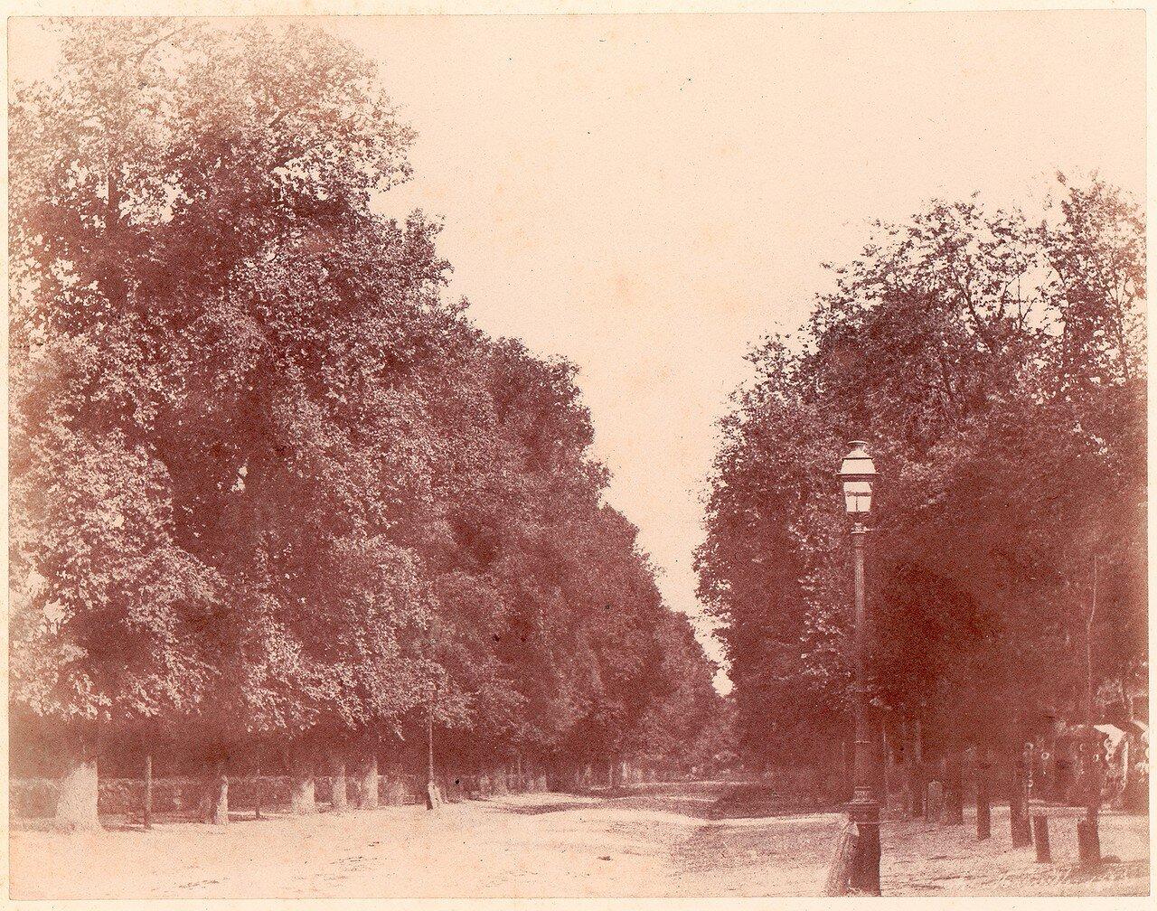 1850. Деревья вдоль дороги