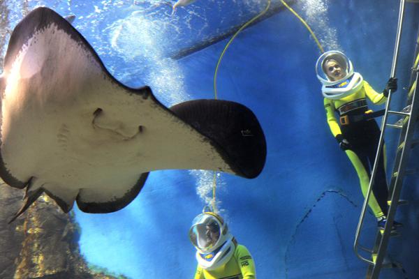 Океанариумы мира, фотографии и видео (животные)(фотографии)