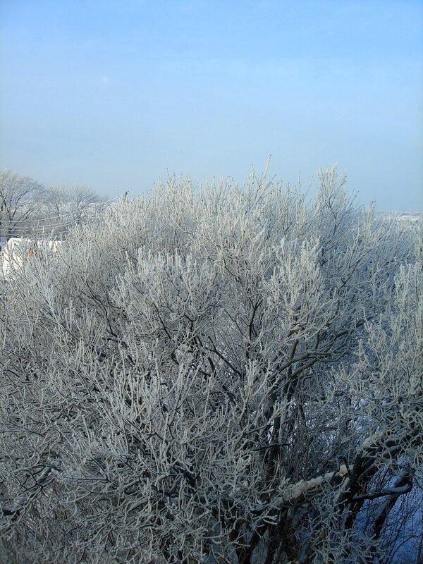 Зима,с.Остров,подворье,январь