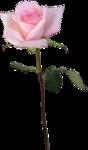 скраб набор Rose