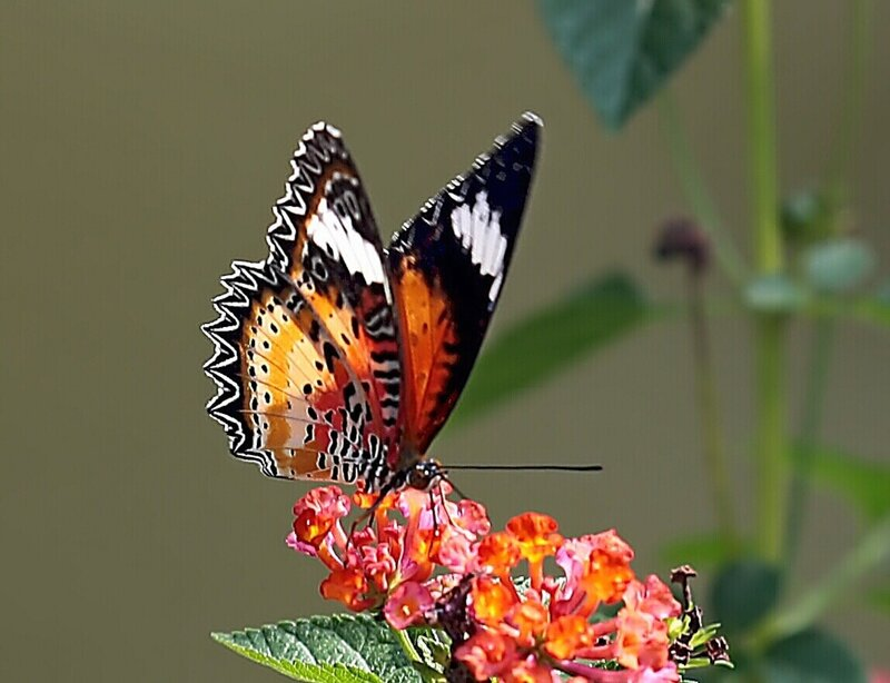 Картинка с бабочками доброе утро, картинки котами для