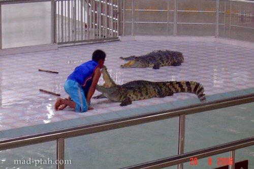 хайнань, китай, нань шань, гуань инь, тигры, крокодилы, буддизм