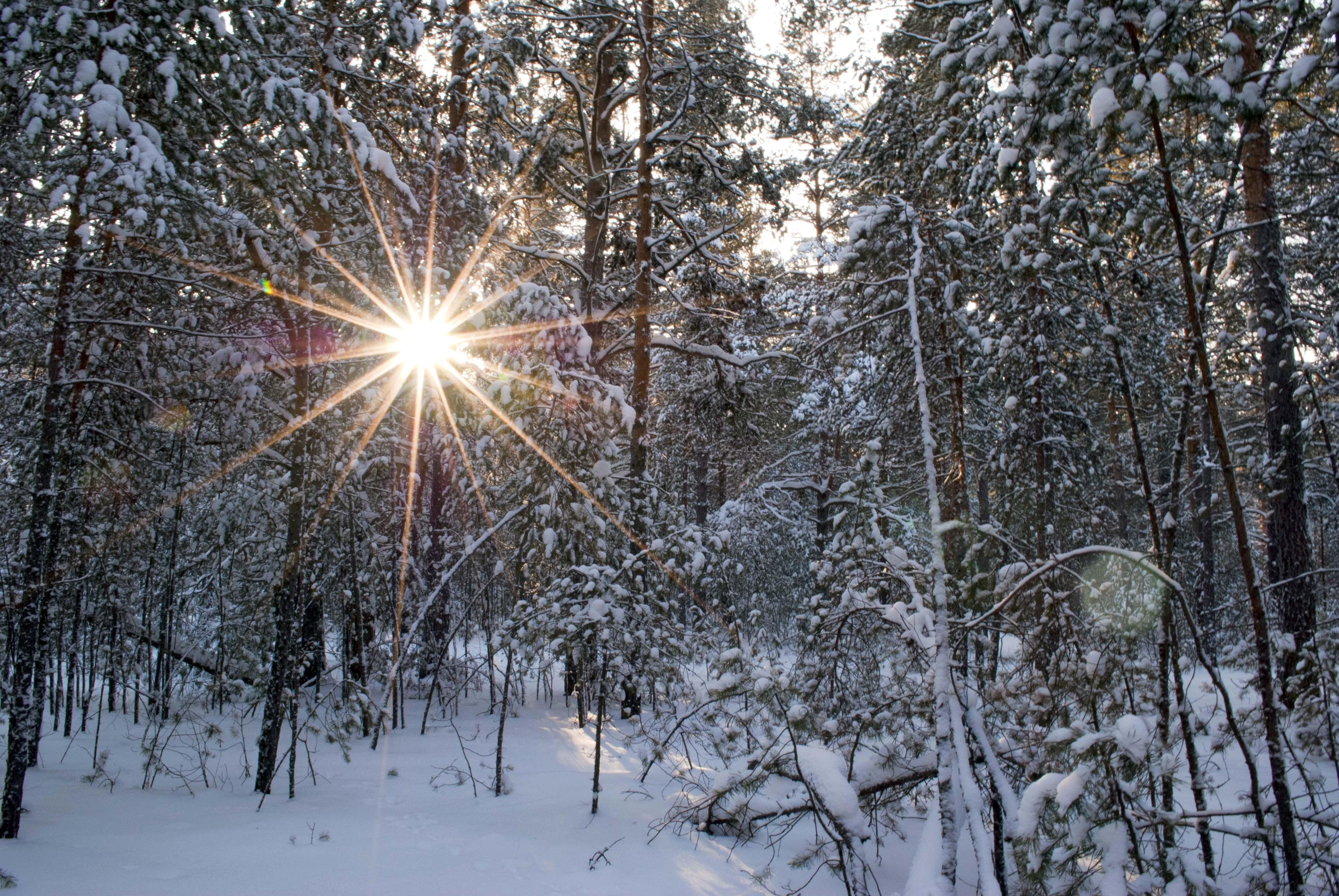 Зимний лес. Морозный солнечный день.