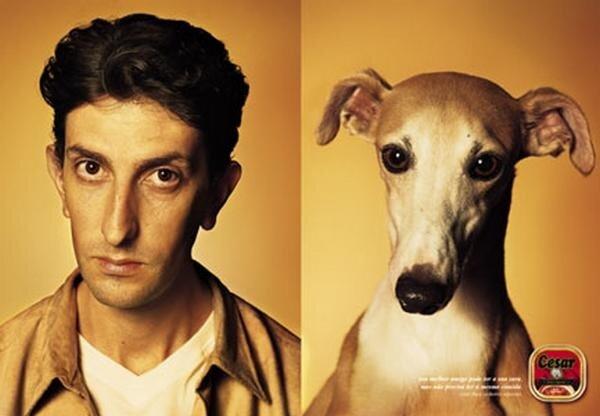 собаки похожие на людей