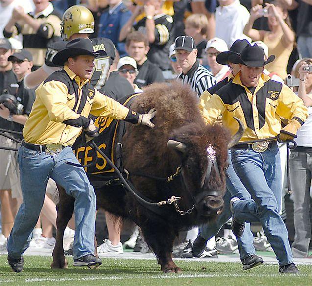 Живые талисманы в студенческом спорте / NCAA Top Real Animal Mascots - Ralphie / Colorado