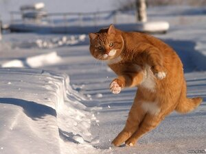 На выходных во Владивостоке возможен слабый снег