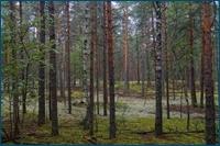 http://img-fotki.yandex.ru/get/5701/15842935.18d/0_d5e25_12aabf94_orig.jpg