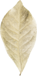 MiMiConcept-Collab Natural Fresh-Elements (17).png