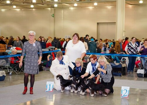 Выставка собак всех пород «Россия-2014»