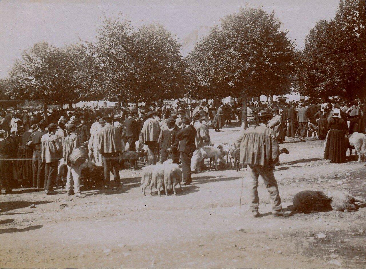 1900. Кемпер. Торговля овцами на местном рынке