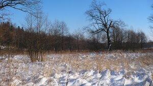 В лесу. Поездка в Трускавец в декабре 2010
