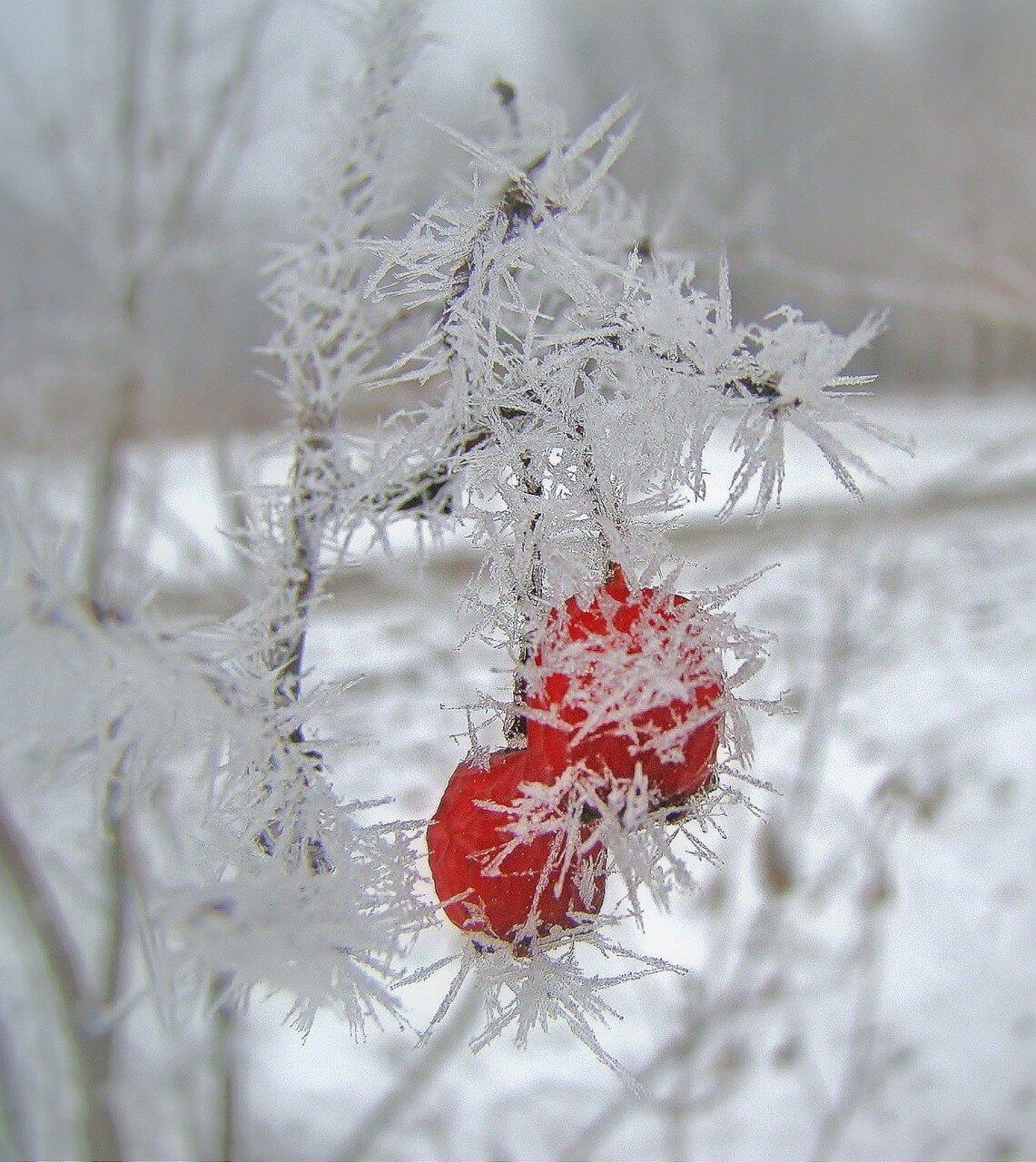 Зимнее украшение!