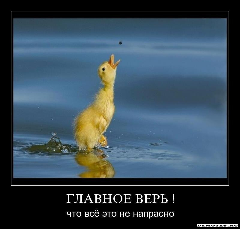 http://img-fotki.yandex.ru/get/5701/posmetnaia-el.c8/0_479ac_c4df962b_XL.jpg