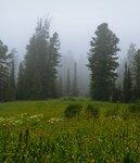 Туча в лесу