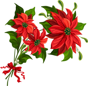цветы Рождества