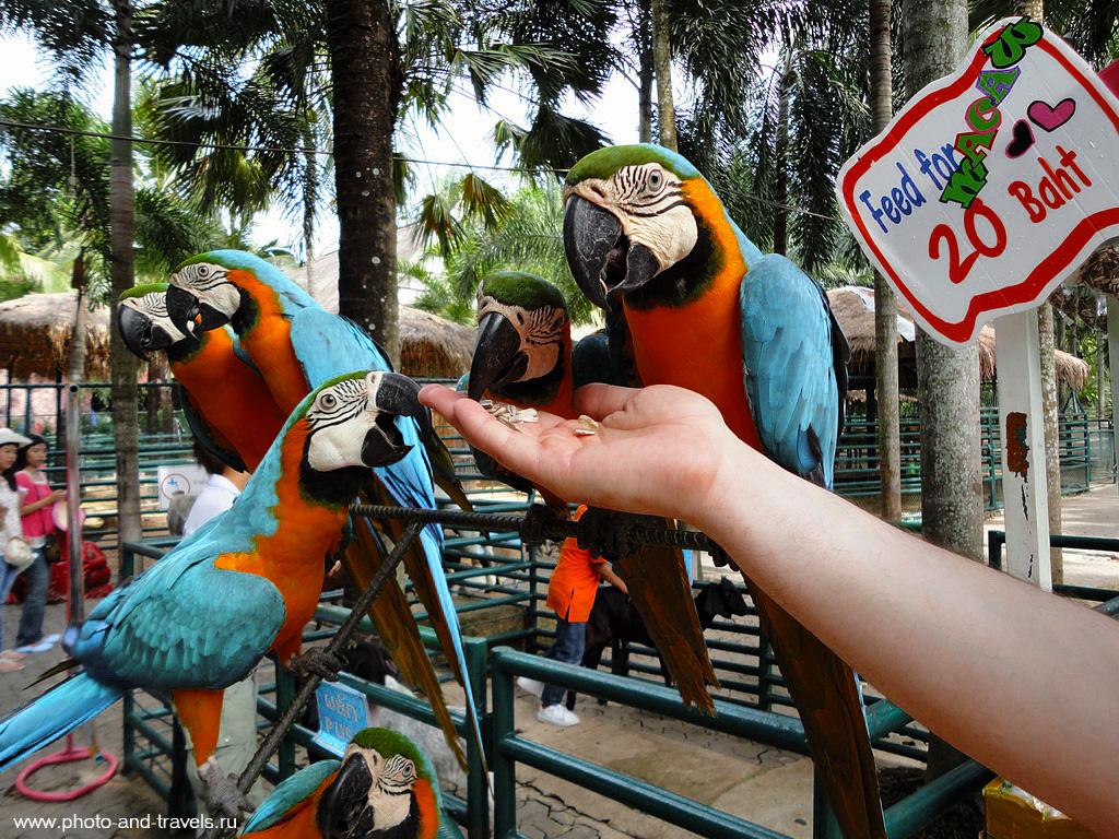 4. В ботаническом саду Nong Nooch можно покормить попугаев