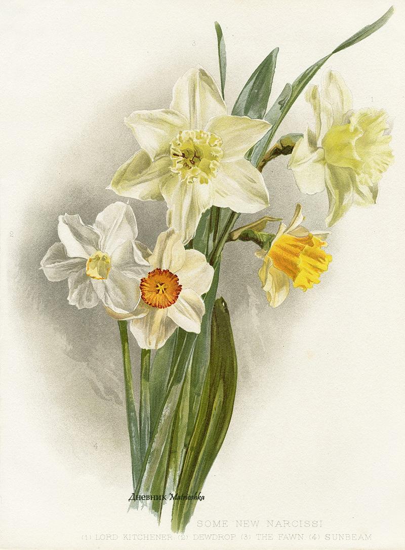 Ботанические картинки цветов 7