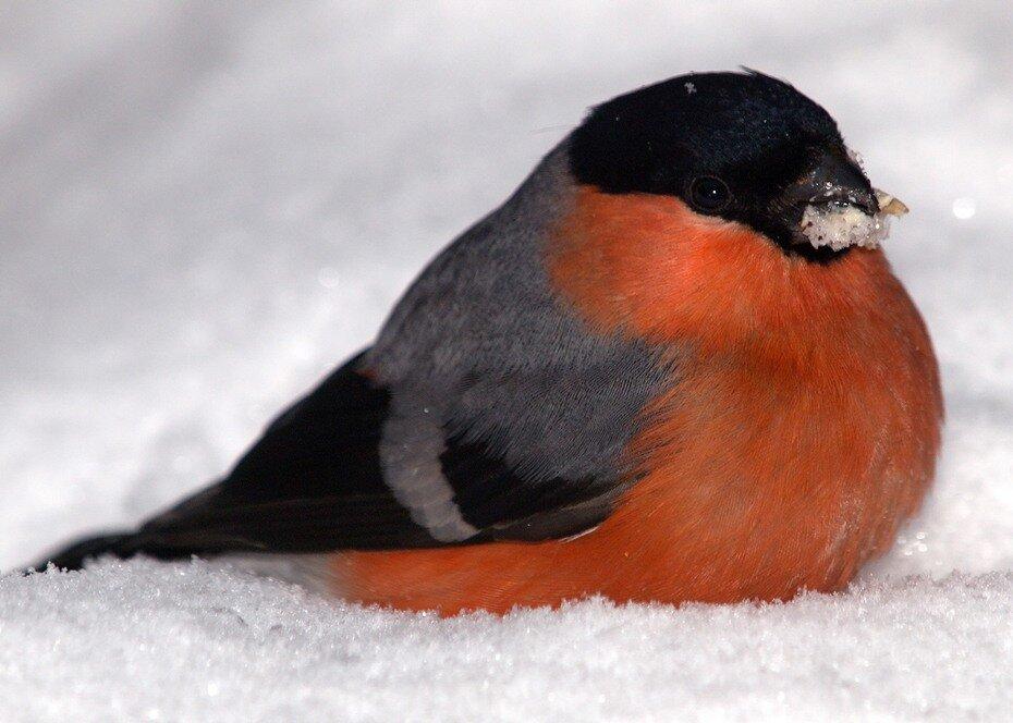 ...прилетают в наши края зимовать.  Фото: Социальный вирус.