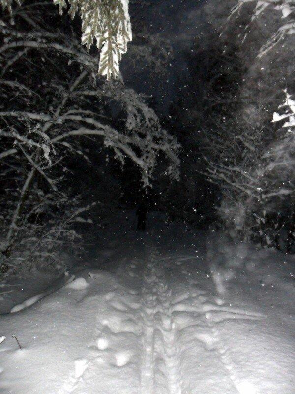 В лесу после снегопада.