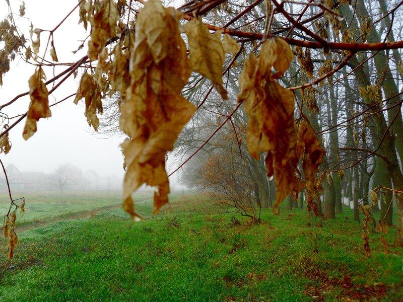 Мокрые ветви, осень