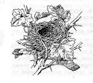 гнездо славки